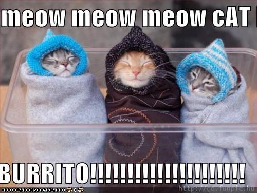 Meow Meow Meow Cat Burrito Burrito Cheezburger Funny Memes Funny Pictures