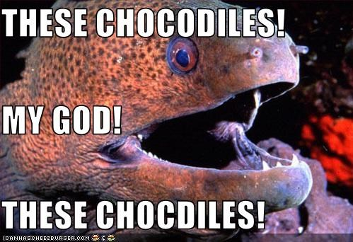 THESE CHOCODILES! MY GOD! THESE CHOCDILES! - Cheezburger