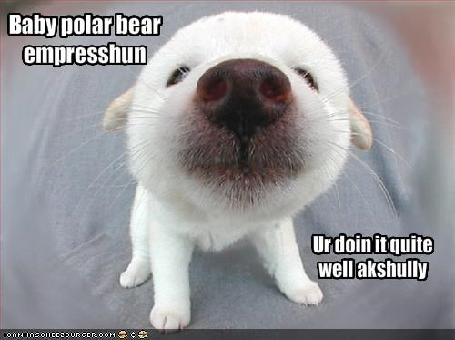 baby impression labrador polar bears puppy - 1791629568