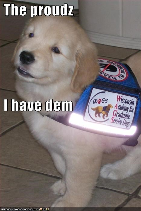 golden retriever proud service dogs work - 1791791360