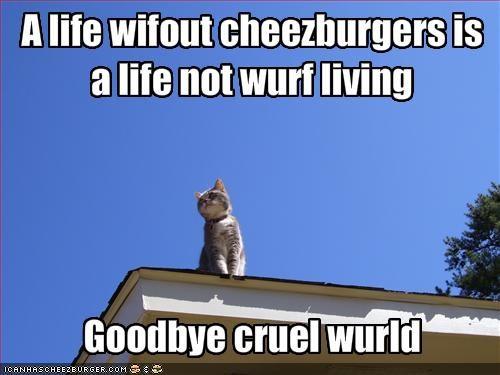 Cheezburger Image 1793131264
