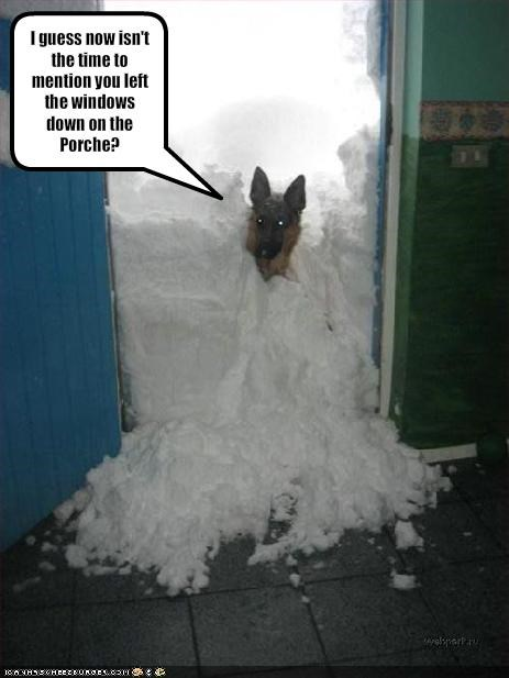 car door german shepherd snow windows - 1793273088
