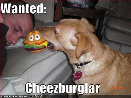 Cheezburger Image 1794816768