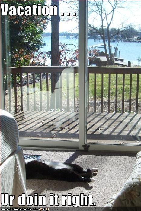 doin it rite happy nap sunshine vacation - 1795924736