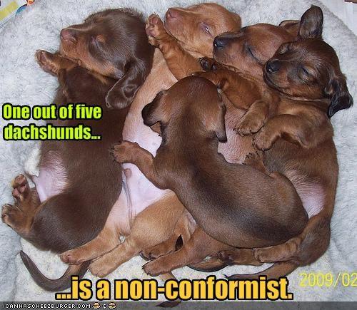 dachshund litter Pillow - 1796913920