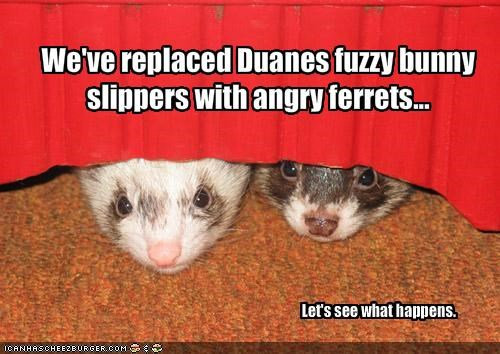 we ve replaced duanes fuzzy bunny slippers with angry ferrets