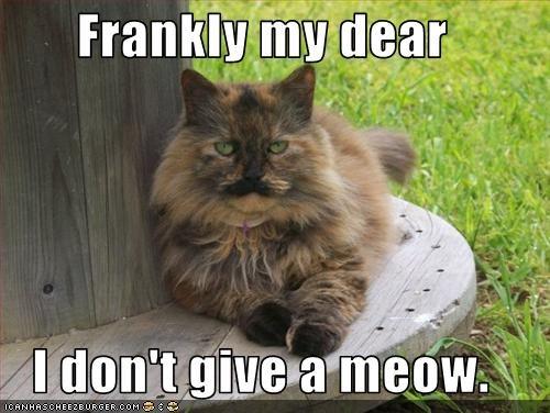 meow moustache movies outside - 1799270656