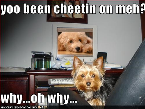 Cheezburger Image 1799780096