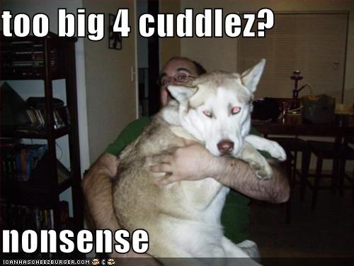 big,cuddles,hugging,husky