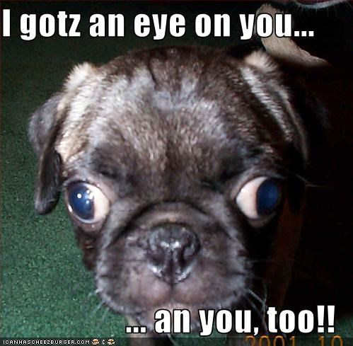 googly eyes,pug