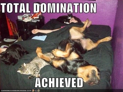 bed domination human dogs Cats