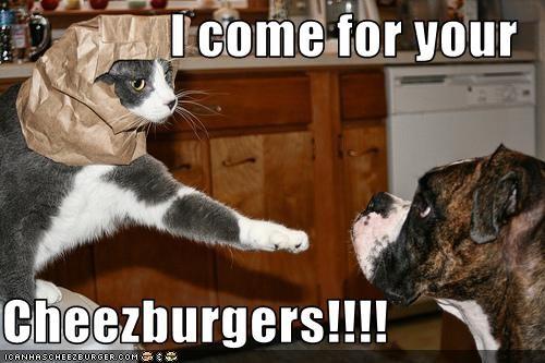 Cheezburger Image 1804711680