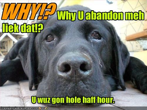 abandon crying gone labrador Sad - 1804956416