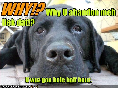 abandon crying gone labrador Sad - 1804956416