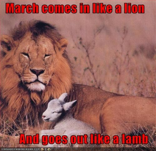 March Comes In Like And Goes Out Like >> March Comes In Like A Lion And Goes Out Like A Lamb Cheezburger