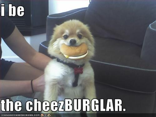 cheezburger stealing thief - 1808868096