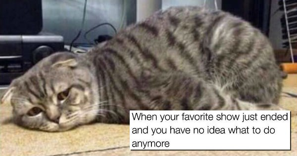 Memes,lol,funny,animals
