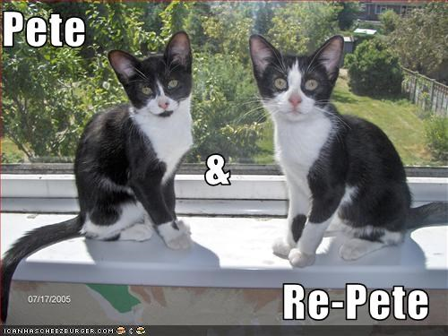 cute kitten look a like - 1811000576