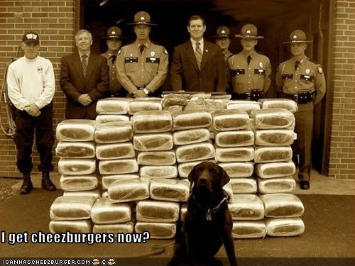 cheezburger,drugs,hero,labrador,police