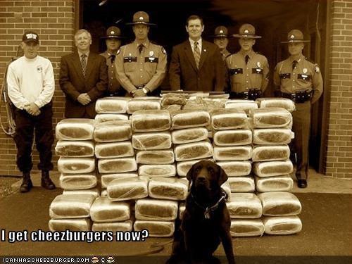 cheezburger drugs hero labrador police - 1811251968