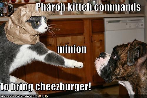 Cheezburger Image 1812710656