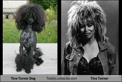 Tina Turner Dog Totally Looks Like Tina Turner