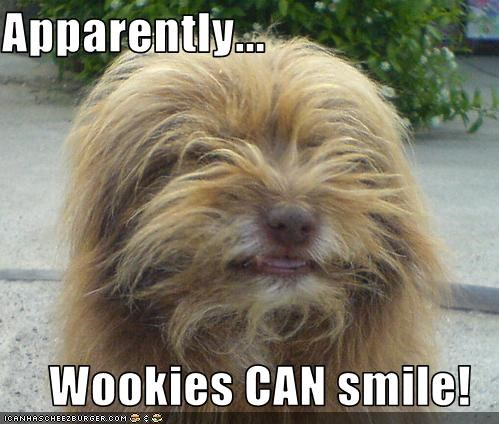 chewbacca,smile,star wars,whatbreed,Wookies