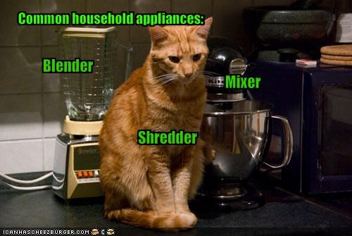 ginger helping kitchen - 1823079168