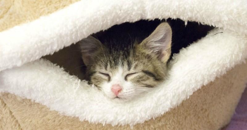 list cute Cats Video - 1823237