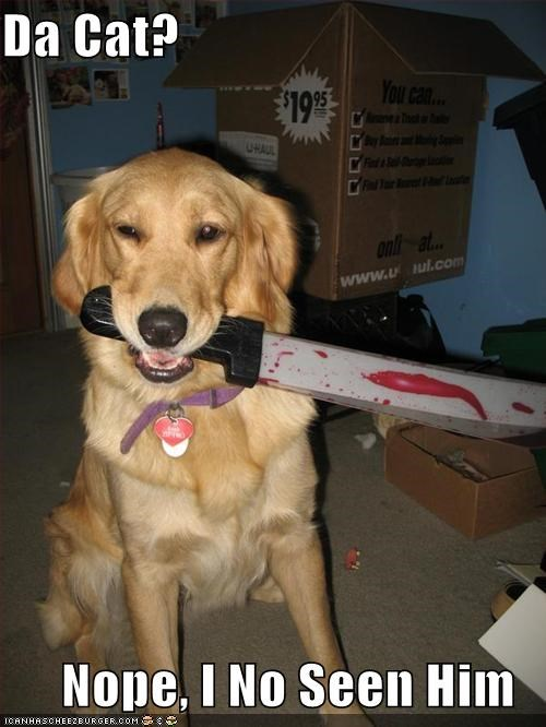 golden retriever knife lolcats suspicious toys - 1823357696