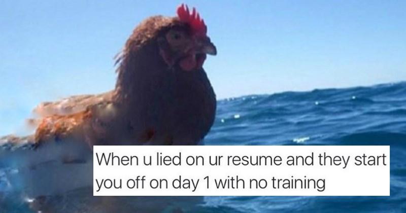 chicken,list,Memes