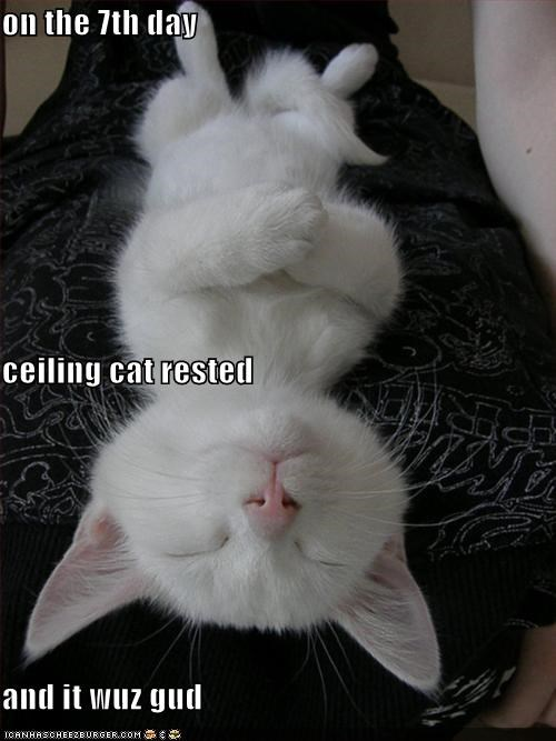 ceiling cat,kitten,nap