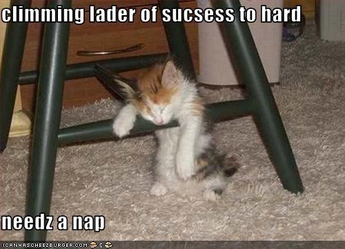 cute kitten nap work - 1826610944