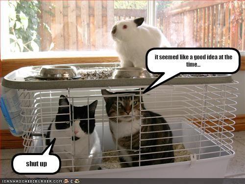 bad idea cage lolbuns stuck - 1826695936