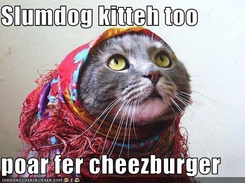 Cheezburger Image 1826880256