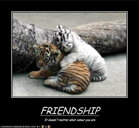 cute,friends,lolcubs,loltigers