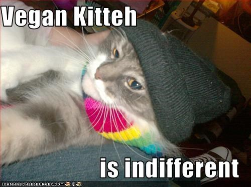Vegan Kitteh  is indifferent