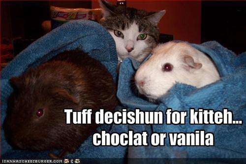 chocolate,fud,lolguineas,murder,nom nom nom