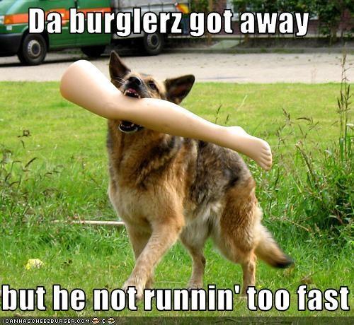burglar german shepherd guard dog legs running thief