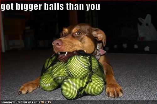 Cheezburger Image 1829053184
