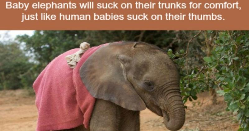 true animal facts