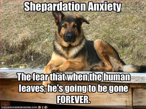anxiety german shepherd gone human leaves Sad - 1832456448