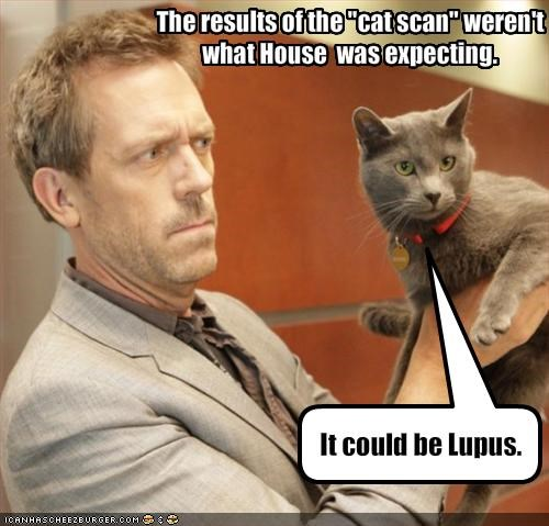 animals,House MD,hugh laurie,lolcats,the hawt,TV