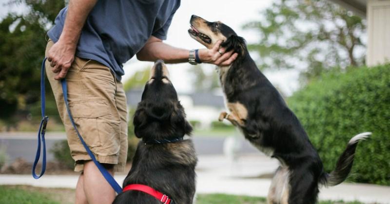 dogs list cute - 1835269