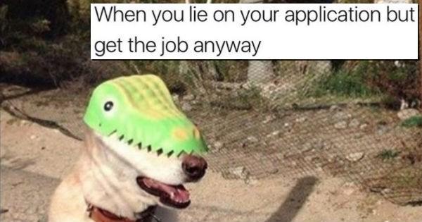 dog memes, dogs