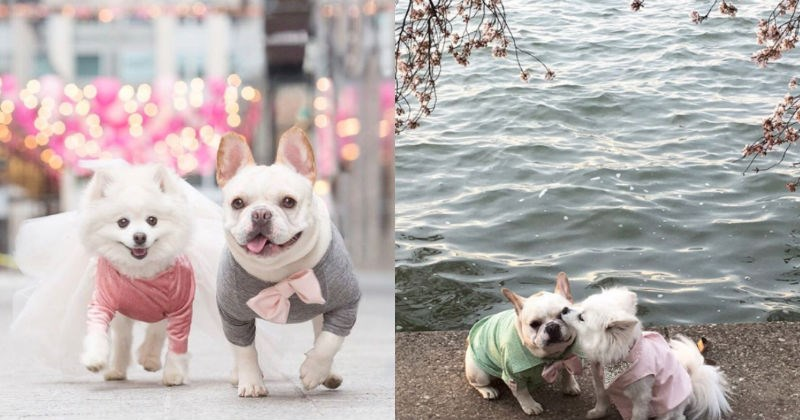 dogs,cute,photoshoot,engagement