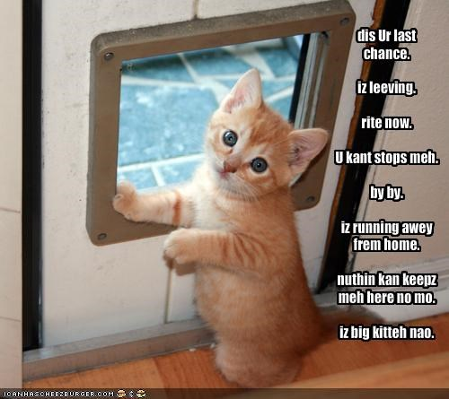 cute kitten threats - 1837932800