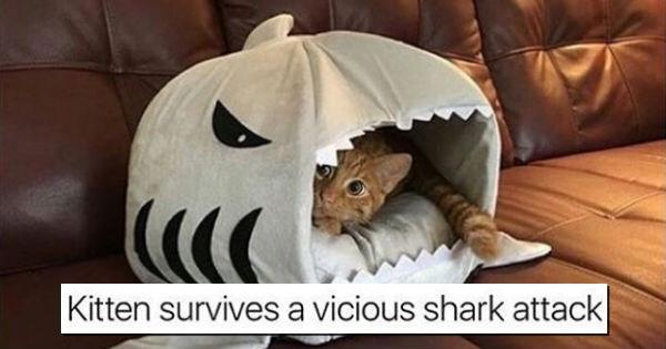 Memes,Cats,funny