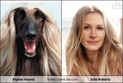 actor Afghan Hound dogs hair style julia roberts movies