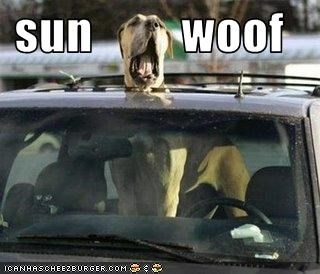 boxer cars driving sunroof wind